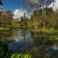 Bodnant Garden Wales - National Trust