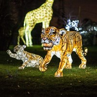 Chester & The Lanterns at Chester Zoo