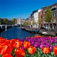 Amsterdam & The Dutch Bulbfields
