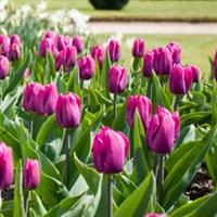 The Malvern Spring Show